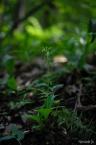 나나벌이난초